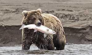 Croisières en Alaska