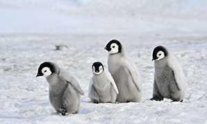 Croisières en Antarctique