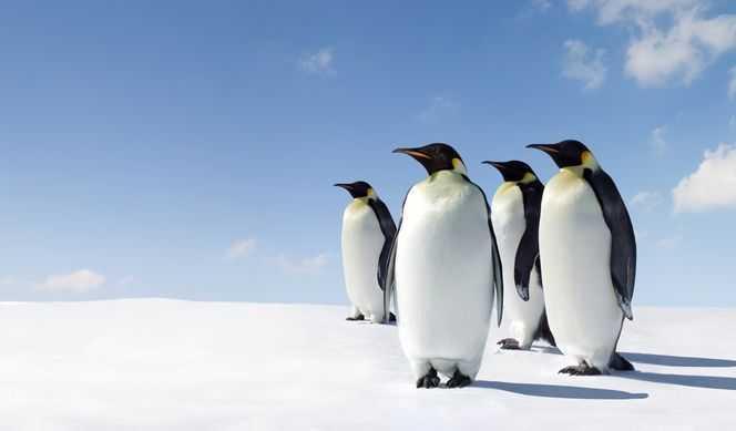 Jour 5 : Antarctique