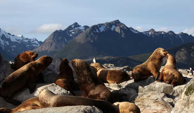 L'essentiel de la Patagonie avec Quark Expeditions