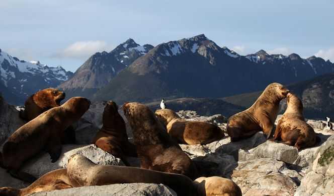 Argentine, Chili, Antarctique, Îles Malouines, Uruguay avec Celebrity Cruises