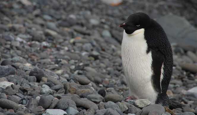 Antarctique Express avec Quark Expeditions