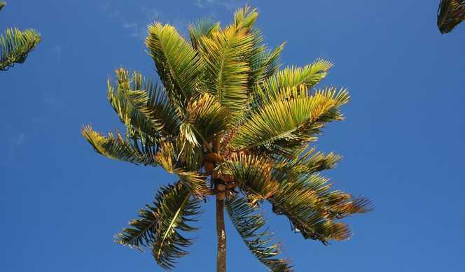 Martinique, Guadeloupe, Dominique, Saint-Christophe-et-Niévès, Saint-Barthélemy avec Ponant